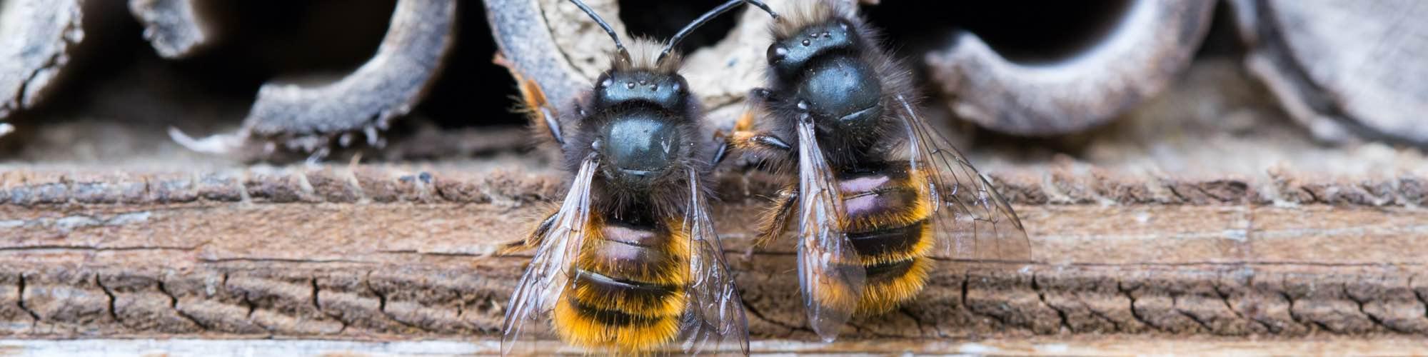 Bienenhotel Ratgeber