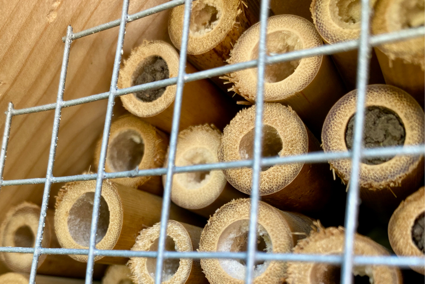 Insektenhotel selbst bauen   Pickschutz