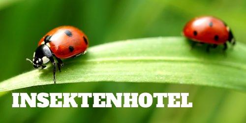 Ratgeber Insektenhotel