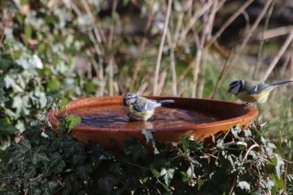 vogeltraenken-und-insektentraenken-dringend-aufstellen