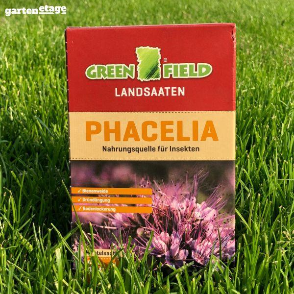 Greenfield Landsaaten Phacelia