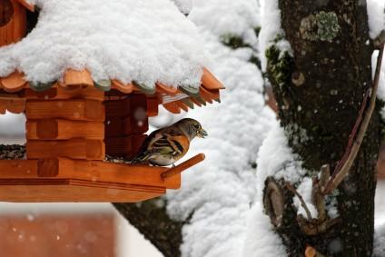 singvogel-im-vogelhaus-im-winter