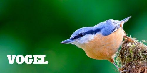 Ratgeber Vogel